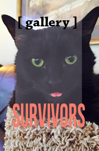 survivors-teaser